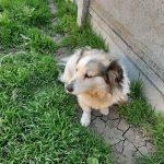 Paco ter adoptie of opvang