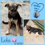 Lola ter adoptie of opvang