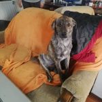 Pepper ter adoptie of opvang