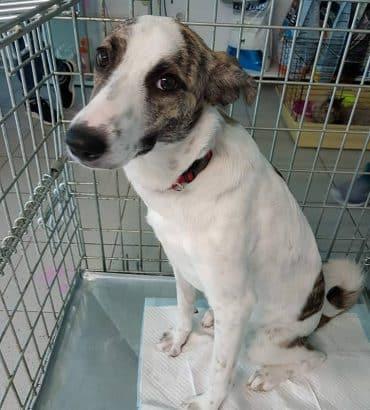 Bella ter adoptie of opvang